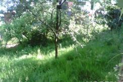 prigorod 2 244x163 - Участок в Пригороде (3200 м²)