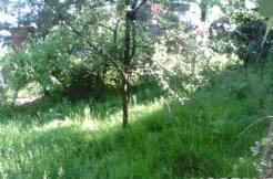 prigorod 2 246x162 - Участок в Пригороде (3200 м²)